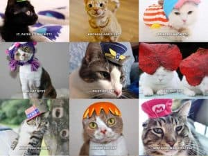 Cute Cats in Hats